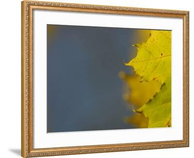 Leaves During Autumn in Nature--Framed Photographic Print