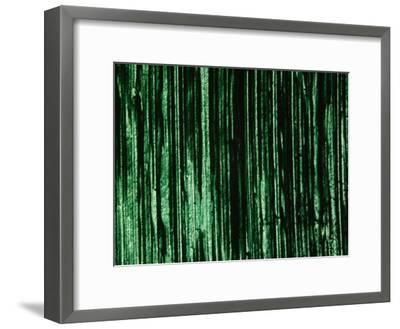 Green and Black Brush Strokes--Framed Photographic Print