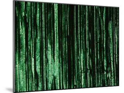 Green and Black Brush Strokes--Mounted Photographic Print