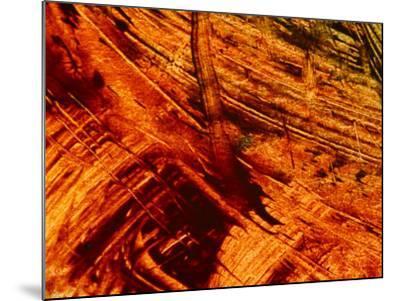 Fiery Orange Paintbrush Strokes--Mounted Photographic Print