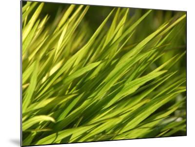 Close-Up of Verdant Green Blades of Grass Growing--Mounted Photographic Print
