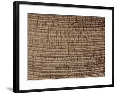 Close-Up Rough Bark on a Palm Tree--Framed Photographic Print