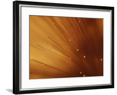 Fiber Optic Wires in Bright and Vibrant Orange Light--Framed Photographic Print