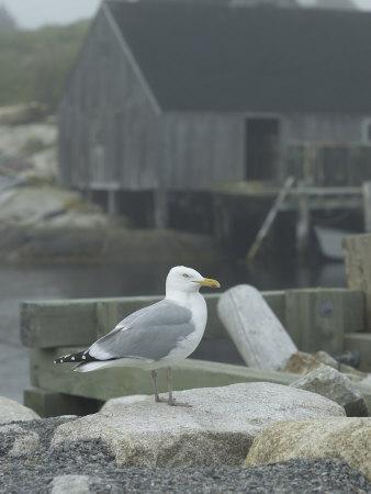 Bird on Foggy Pier Near House in Harbor--Framed Photographic Print