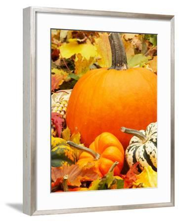 Harvest Still Life with Pumpkins and Squash--Framed Photographic Print