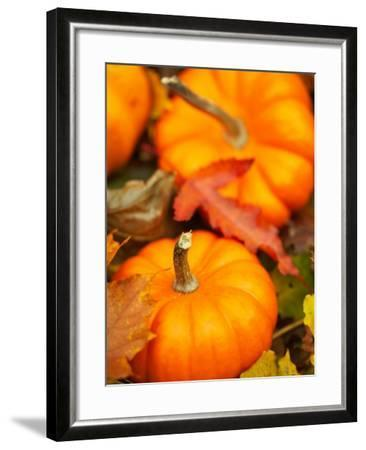 Traditional Autumnal Scene of Small Pumpkins and Fall Leaves--Framed Photographic Print
