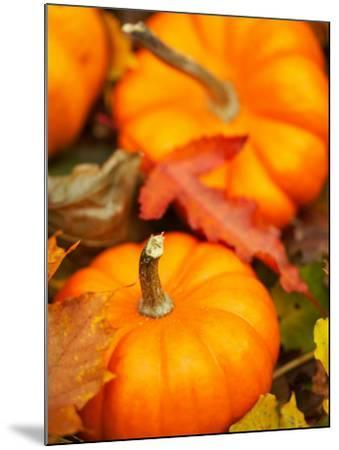 Traditional Autumnal Scene of Small Pumpkins and Fall Leaves--Mounted Photographic Print