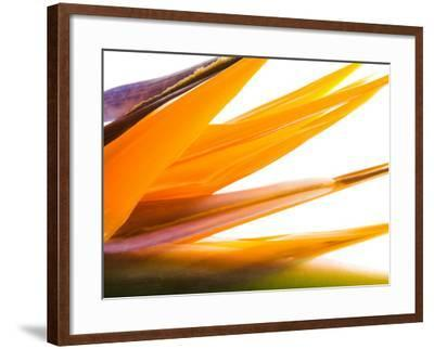 Close-Up of Beautiful Blooming Flower--Framed Photographic Print