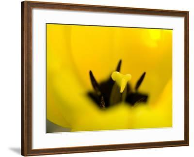 Beautiful Blooming Flowers with Anthers and Stamens--Framed Photographic Print