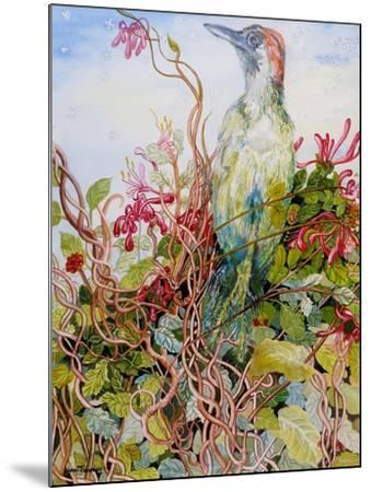 Woodpecker in the Honeysuckle, 2010-Joan Thewsey-Mounted Giclee Print