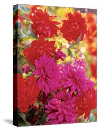 House & Garden - April 2003-Alexandre Bailhache-Stretched Canvas Print