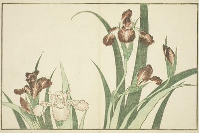 Iris, from the Picture Book of Realistic Paintings of Hokusai (Hokusai Shashin Gafu), C.1814-Katsushika Hokusai-Framed Giclee Print