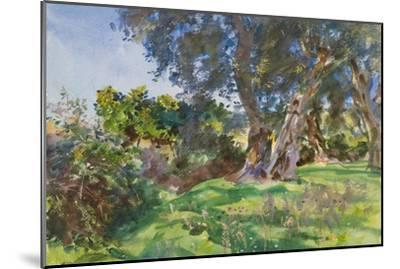 Olive Trees, Corfu-John Singer Sargent-Mounted Giclee Print