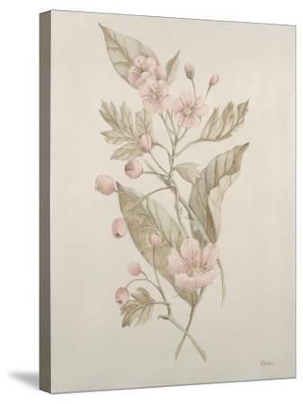 Botanicals IV-Rikki Drotar-Stretched Canvas Print