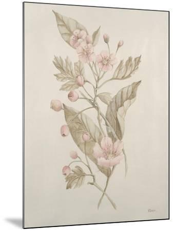 Botanicals IV-Rikki Drotar-Mounted Giclee Print