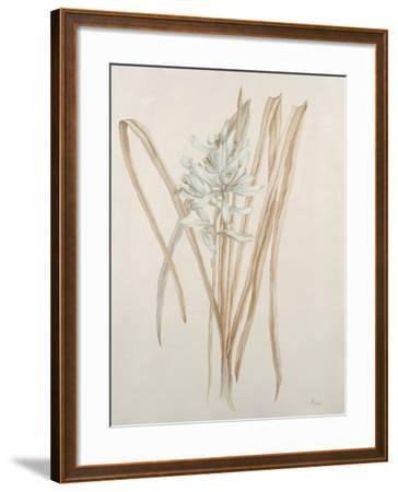 Botanicals V-Rikki Drotar-Framed Giclee Print