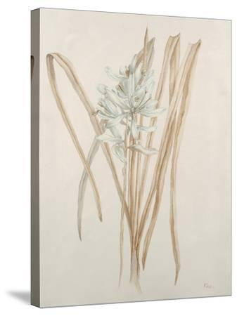 Botanicals V-Rikki Drotar-Stretched Canvas Print
