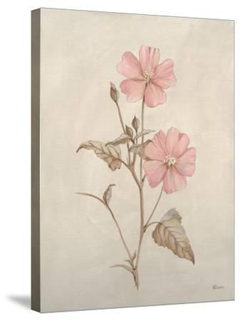 Botanicals XI-Rikki Drotar-Stretched Canvas Print