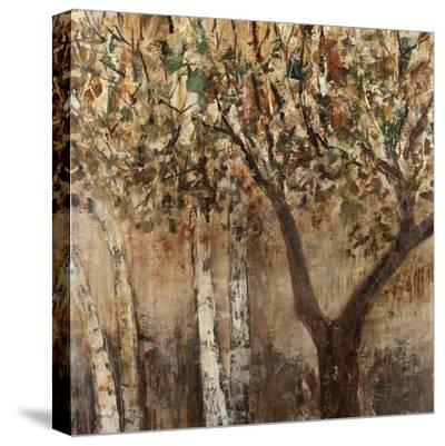 Tree Shade-Tim O'toole-Stretched Canvas Print