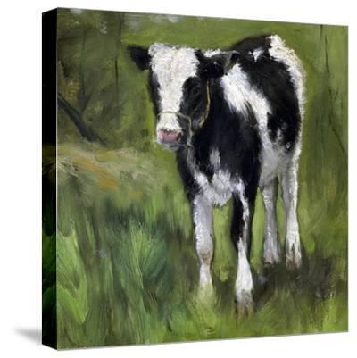 A Black and White Spotted Calf, Standing in a Meadow-Geo Poggenbeek-Stretched Canvas Print