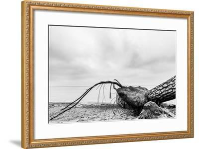 Fallen Tree on the Beach after Storm. Sea on a Cloudy Day. Black and White, far Horizon.-Michal Bednarek-Framed Photographic Print