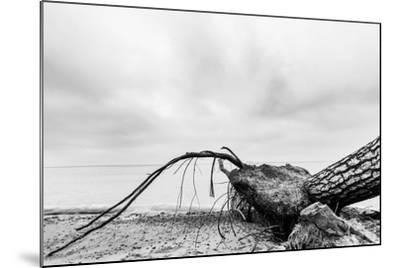 Fallen Tree on the Beach after Storm. Sea on a Cloudy Day. Black and White, far Horizon.-Michal Bednarek-Mounted Photographic Print
