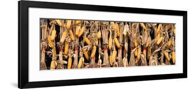 China 10MKm2 Collection - Corn Drying-Philippe Hugonnard-Framed Photographic Print