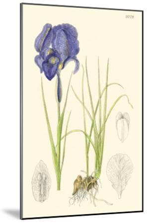 Spring Bounty I-Samuel Curtis-Mounted Art Print