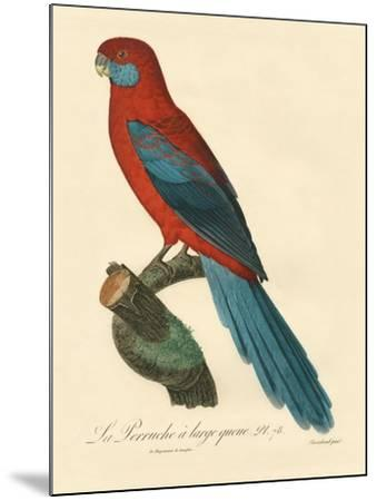 Barraband Parrot No. 78-Jacques Barraband-Mounted Art Print