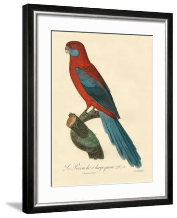 Barraband Parrot No. 78-Jacques Barraband-Framed Art Print