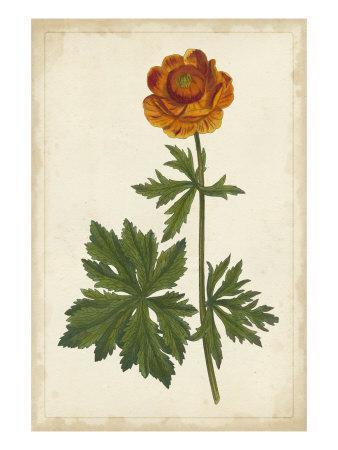 Vibrant Botanicals V--Framed Art Print