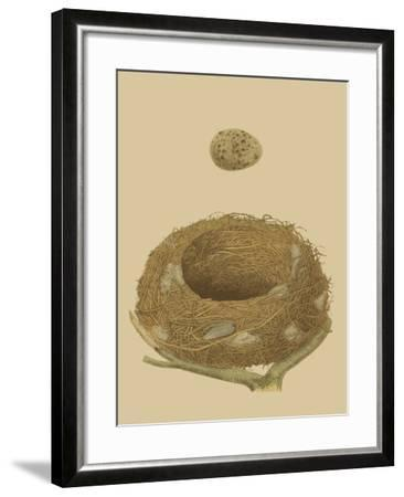 Antique Nest and Egg IV-Reverend Francis O^ Morris-Framed Art Print