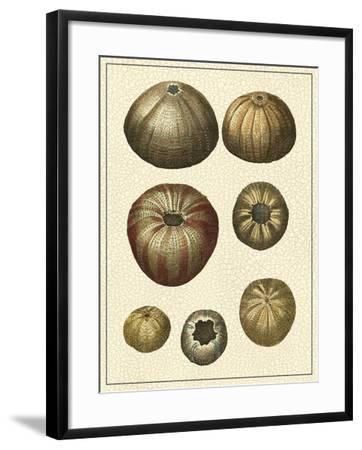 Crackled Antique Shells III-Denis Diderot-Framed Art Print