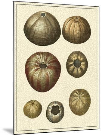 Crackled Antique Shells III-Denis Diderot-Mounted Art Print