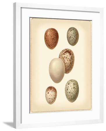 Bird Egg Study III-Vision Studio-Framed Art Print