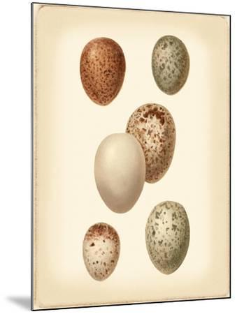 Bird Egg Study III-Vision Studio-Mounted Art Print