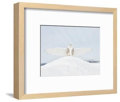 Owl in Flight III-PHBurchett-Framed Art Print