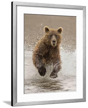 Bears at Play II-PHBurchett-Framed Art Print