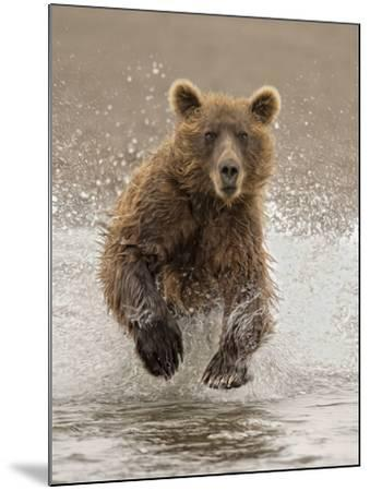 Bears at Play II-PHBurchett-Mounted Art Print