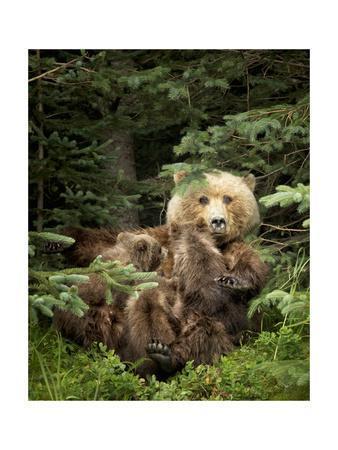 Bears at Play IV-PHBurchett-Framed Art Print