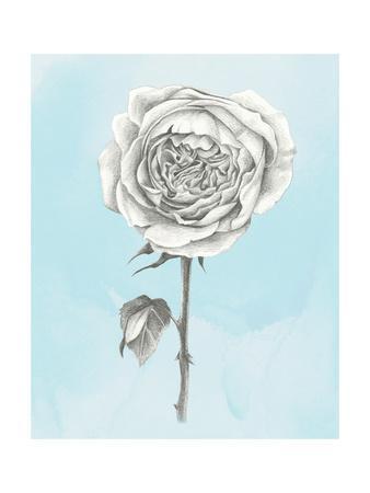Graphite Rose I-Grace Popp-Framed Art Print