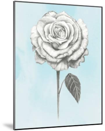 Graphite Rose III-Grace Popp-Mounted Art Print