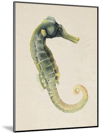Sea Dweller VI-Grace Popp-Mounted Art Print