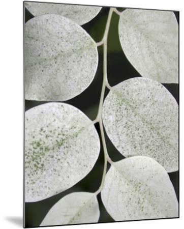 Leaf Design I-Jim Christensen-Mounted Art Print