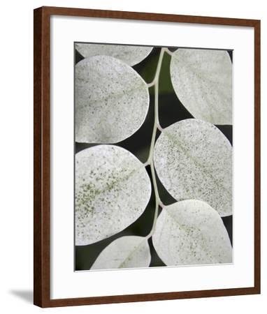 Leaf Design I-Jim Christensen-Framed Art Print
