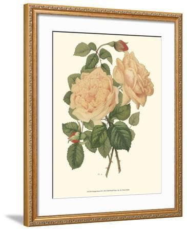Vintage Roses III-Vision Studio-Framed Art Print