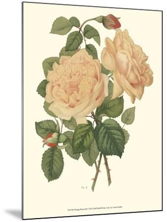 Vintage Roses III-Vision Studio-Mounted Art Print
