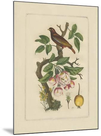 Exotic Bird and Botanical II--Mounted Art Print