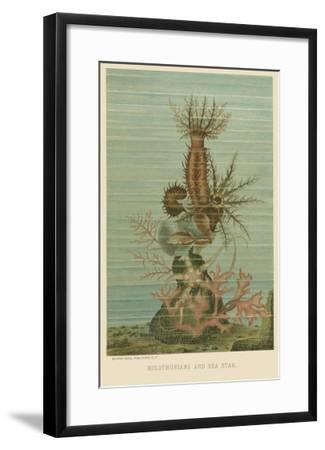 Holothurians and Sea Star--Framed Art Print