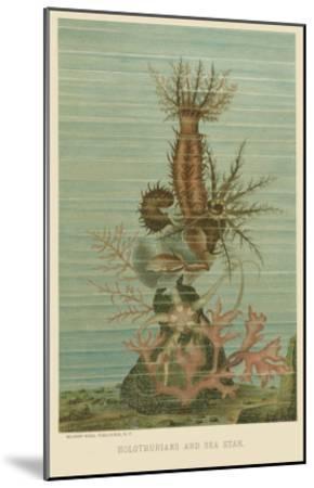 Holothurians and Sea Star--Mounted Art Print